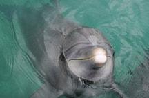 xcaret-nado-con-delfines-fanny.jpg