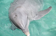 xcaret-nado-con-delfines-kuna.jpg