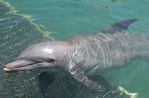 xcaret-nado-con-delfines-tosha.jpg