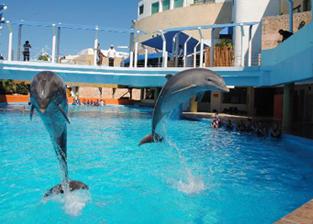 Nadar con delfines en acuario de cancún - Delphinus