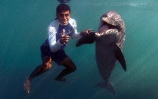 nado-con-delfines-en-riviera-maya-delphinus-instituto-cuidados.jpg
