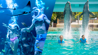 parques-en-cancun-delphinus-trek.png