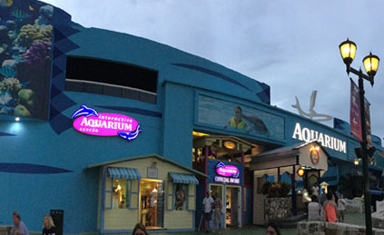 best-place-to-swim-with-dolphins-in-cancun-aquarium-tickets1.jpg